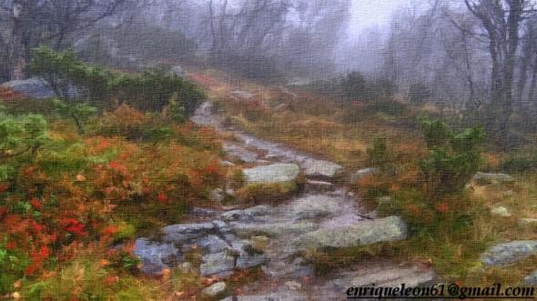 La senda del bosque