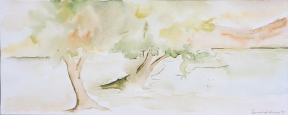 arboles magallanicos