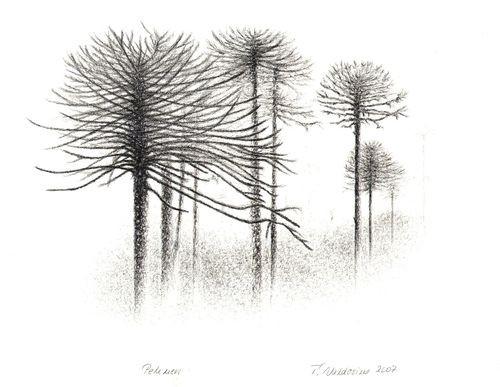 Bosque Araucarias