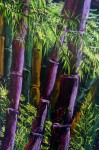 Obras de arte: America : Colombia : Distrito_Capital_de-Bogota : Bogota : Serie (Bambu)