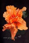 Obras de arte: America : Nicaragua : Carazo : Jinotepe : Hibisco Naranja