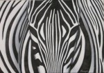 Obras de arte: America : Perú : Lima : miraflores : Cebra Real