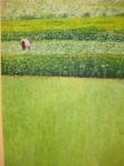Obras de arte: Europa : España : Extremadura_Badajoz : don_benito : la cosecha