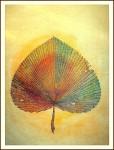 Obras de arte: Africa : Marruecos : Grand_Casablanca : casablanca : Autumn