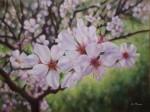 Obras de arte: Europa : España : Extremadura_Badajoz : Navalvillar_de_Pela : flores de almendro