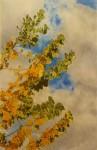 Obras de arte:  :  :  :  : Desde mi ventana.