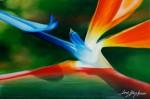 Obras de arte:  :  :  :  : AVE DE PARAISO