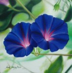 Obras de arte:  :  :  :  : BLUE MORNING GLORY