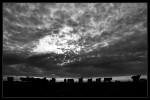 Obras de arte:  : Argentina : Buenos_Aires : Lomas_de_Zamora : Atardecer