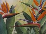Obras de arte: America : Colombia : Antioquia : Medellin : AVES DEL PARAISO