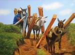 Obras de arte: America : Colombia : Antioquia : Medellin : HACIA EL ASERRADERO