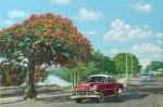 Obras de arte: America : Cuba : Matanzas : naranjal : flamboyan y chevrolet a orillas del rio sanjuan´´