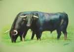 Obras de arte: Europa : España : Comunidad_Valenciana_Castellón : castellon_ciudad : Toros en el campo