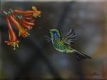 Obras de arte: America : M�xico : Baja_California_Sur : lapaz : Colibr�