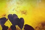 Obras de arte:  : Colombia : Antioquia : Medellin : opium