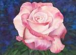 Obras de arte: America : Argentina : Buenos_Aires : Capital_Federal : Rosa blanca rosada