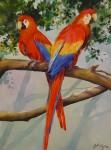 Obras de arte: America : Colombia : Antioquia : Medellin : GUACAMAYAS