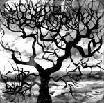 Obras de arte: America : Colombia : Distrito_Capital_de-Bogota : Bogota : serie árboles