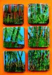 Obras de arte: America : Colombia : Distrito_Capital_de-Bogota : Bogota : Serie Bambús