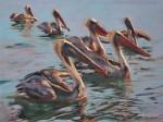 Obras de arte: America : México : Baja_California_Sur : lapaz : Pelícanos