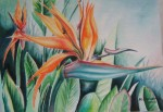 Obras de arte:  : Costa_Rica : San_Jose : Moravia : AVE DEL PARAISO