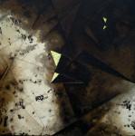 <a href='http//en.artistasdelatierra.com/obra/135216--.html'> &raquo; Oscuraldo de las profundidades<br />+ más información</a>