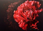 Obras de arte: Europa : España : Comunidad_Valenciana_Alicante : Elda : al rojo rojo clavel
