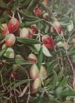 Obras de arte: Europa : España : Comunidad_Valenciana_Alicante : Elda : cosecha oliva