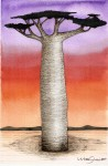 Obras de arte: America : México : Veracruz-Llave : Xalapa : Baobab