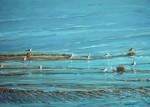 Obras de arte: Europa : España : Andalucía_Almería : Almeria : El mar que nos baña