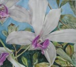 Obras de arte:  : Costa_Rica : San_Jose : Moravia : ORQUIDEAS I