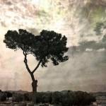 Obras de arte: Europa : España : Murcia : cartagena : Dibujos al aire que nos llevan