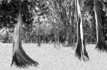 Obras de arte: America : México : Mexico_Distrito-Federal : Coyoacan : Invierno interminable