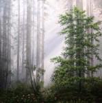 Obras de arte: Europa : España : Catalunya_Barcelona : Cervelló : niebla