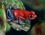 Obras de arte:  : Costa_Rica : San_Jose : Moravia : RANA BLUE JEANS