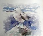 Obras de arte: America : Ecuador : Guayas : GUAYAQUIL : piquero patas azules
