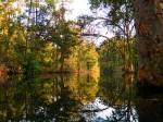 Obras de arte:  : Italia : Veneto :  : Arco naturale riflesso nella giungla