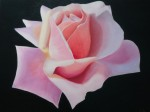 Obras de arte: Europa : España : Comunidad_Valenciana_Alicante : denia : rosa