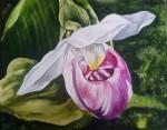 Obras de arte:  : Costa_Rica : San_Jose : Moravia : Orquídea