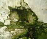 <a href='https://www.artistasdelatierra.com/obra/147558-gato-verde.html'>gato verde &raquo; Didi Dias<br />+ más información</a>