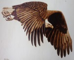Obras de arte: Europa : España : Cantabria : Santander : Aguila americana