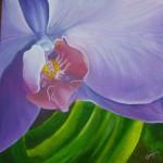 Obras de arte:  : Costa_Rica : San_Jose :  : Orquidea morada