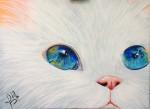 Obras de arte:  : Panamá : Panama-region : albrook : Gato blanco