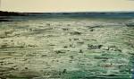 Obras de arte:  : España : Galicia_Pontevedra : Vilagarcía : Mar de curtiñas brancas