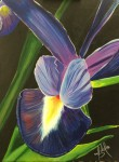 Obras de arte:  : Panamá : Panama-region : albrook : Orquídea morada