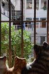 Obras de arte: Europa : España : Madrid : Madrid_ciudad : miran los gatos de trapo