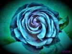 Obras de arte: America : Argentina : Tierra_del_Fuego : Ushuaia : Rosa Azul