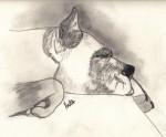 Obras de arte: America : Colombia : Santander_colombia : Bucaramanga : Descanso del animal