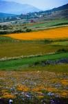 Obras de arte: Europa : España : Cantabria : Santander : Los colores del valle