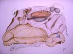 Obras de arte: Europa : España : Catalunya_Barcelona : Barcelona_ciudad : Observando tu desnudez